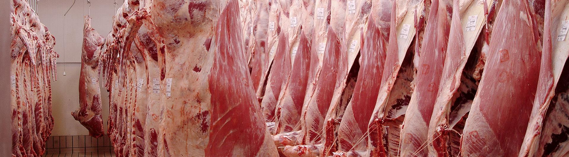 Grossiste en viande